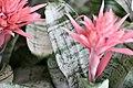 Plant of Thailand - 13.jpg