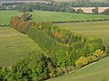 Plantation below Ham Hill - geograph.org.uk - 1014708.jpg