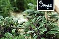 Plantes Aromatiques Cl J Weber04 (23677277725).jpg