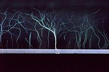 Plasma Trees.jpg