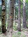 Pod Farským lesem 20.jpg