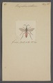 Pompilus - Print - Iconographia Zoologica - Special Collections University of Amsterdam - UBAINV0274 043 06 0002.tif