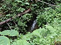 Pri potoku - panoramio (2).jpg