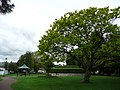Public gardens of Alton, Hampshire, England 6.jpg