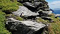 Puffins at Skellig Michael 08.jpg