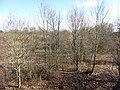 Pusnė 33270, Lithuania - panoramio (8).jpg