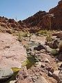 Qesm Saint Katrin, South Sinai Governorate, Egypt - panoramio (15).jpg