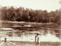 Queensland State Archives 2298 Enoggera Brisbanes water supply c 1897.png