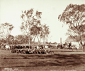 Queensland State Archives 3060 Canning Downs Station near Warwick 4 May 1894.png