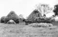 Queensland State Archives 4165 Stackbuilding on farm at Clifton Darling Downs c 1935.png