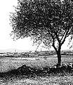 Quneitra, 1929.jpg