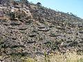Réhabilitation des terrains incendiés 1 Cap Garonne VII-2006.jpg