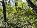 Réserve Naturelle du Lez (2397601234).jpg