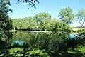 Réserve naturelle régionale des étangs de Bonnelles le 26 mai 2017 - 09.jpg