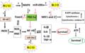 RI and CI alter molecular mechanisms determining survival.webp