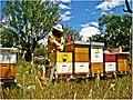 Radovi u pčelinjaku.jpg