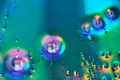 Rainbow Bubbles -1 (4454715628).jpg