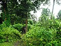 Rajiv Gandhi Tiger Reserve, Nagarhole - panoramio (8).jpg