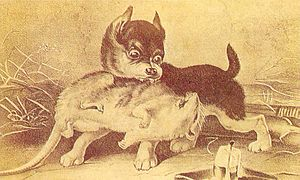 Rat-baiting - Dogs used in rat-baiting varied in size