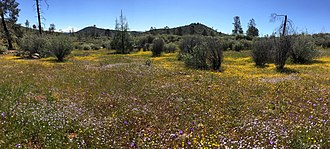Red Hills (Tuolumne County) - The Red Hills area is host to shrubs, perennial grasses, and wildflowers