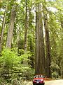 Redwood National Park (32056043174).jpg