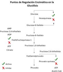 Perspectiva evolutiva del metabolismo - Wikilibros