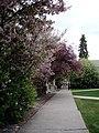 Residence Hall Sidewalk (4631762436).jpg