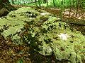 Rezerwat Ostra Góra Polska 10.jpg