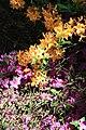 Rhododendronpark Bremen 20090513 048.JPG