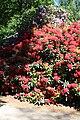 Rhododendronpark Bremen 20090513 115.JPG