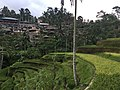 Rice terraces in Tegallalang 5.jpg