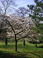 Richmond 019 Terrace Gardens in May.JPG
