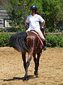 Riding a Horse Backwards 1110817.jpg