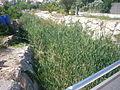 Riera de Castellolí al seu pas pel poble 2.jpg