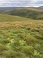 Rough grazing on Craigy Edge - geograph.org.uk - 556641.jpg