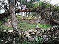 Ruïnes de Kuelap cobertes de vegetació.jpg