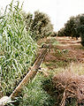 Rudimentary irrigation system Morocco.jpg