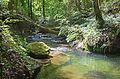 Ruisseau des Vaux (1).jpg