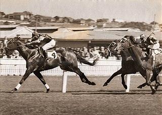 San Domenico (horse) Australian thoroughbred gelding