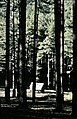 San Ildefonso, monte 1974 09.jpg