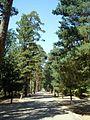 San Ildefonso - Reales Jardines 02.JPG