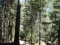 Santa Barbara, ejido el Brillante, P.N. Dgo. - panoramio.jpg