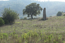 Sardinien menhir vor tortoli.jpg