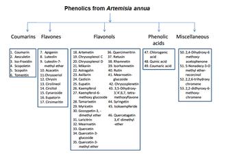 Artemisia annua - Image: Schermata 11 2457342 alle 16.54.16