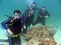 Scuba Diving Kish Island Iran.JPG