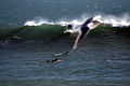 Sea gull and surfers.jpg