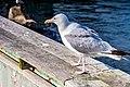 Seagull Harbour Halifax (26375041038).jpg