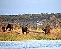 Sedudu Island Botswana (2).jpg