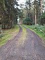 Segeberger Forst 25.jpg