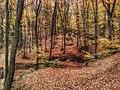 Serbia, Belgrade District, Voždovac, Avala, trees.jpg